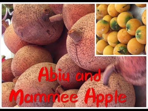 Trái Abiu (Vú Sữa Vàng) và Trái Mammee Apple