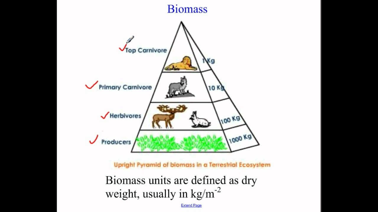 also ecological pyramids youtube rh