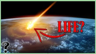 Where Did Life Come From?