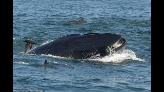 Deutscher fast von Wal verschluckt