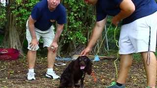 How To Train Aggressive Dogs 1 ( With The Miami Dog Whisperer)