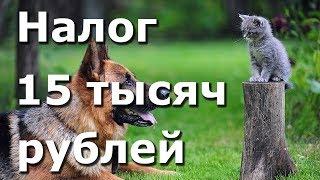 Налог на домашних животных до 15 тысяч рублей