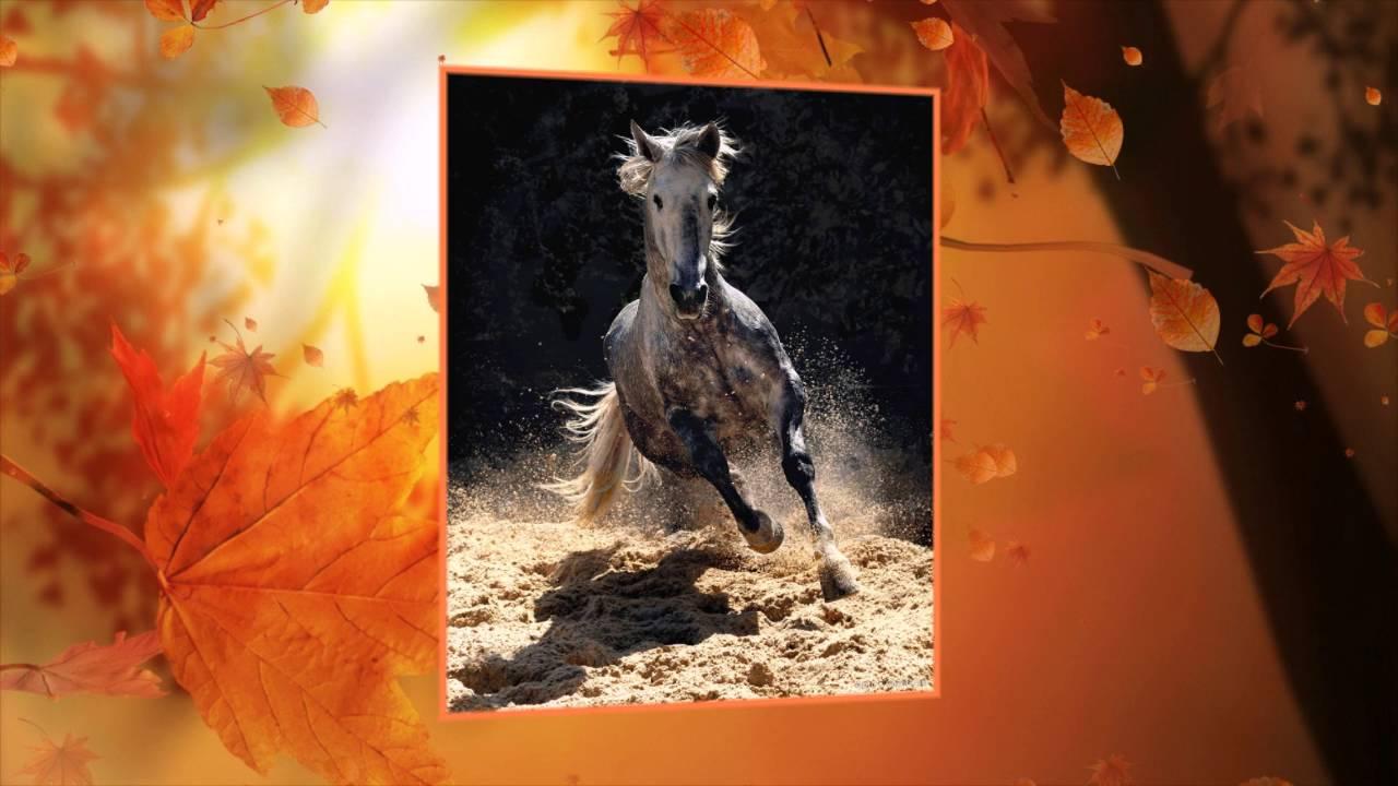 Лошадь на воле фото - YouTube