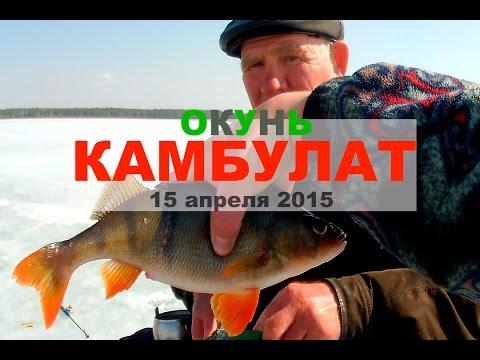 рыбалка на огромного окуня