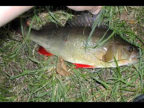 River Test Broadlands 0809