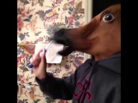Horse And Giraffe Brush Their Teeth Together Vine A Funny Vine On