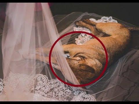 Бездомный пес забрел на свадьбу и лег прямо на фату невесты. Вот что случилось дальше...