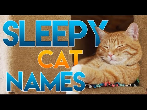 How to Name Your Sleepy Cat