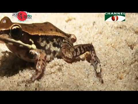 Nature and Life - Episode 238 (Pablakhali Wildlife Sanctuary)