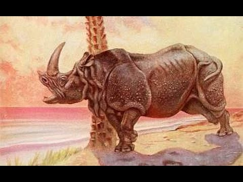 HOW! How the Rhinoceros Got Its Horn