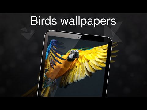 birds wallpapers 4k apps on google play