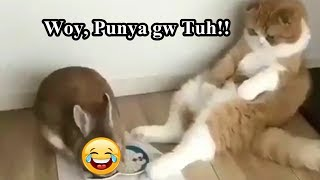 Kucing Ngomong Lucu Part 1 Tahan Tawa 3 Menit