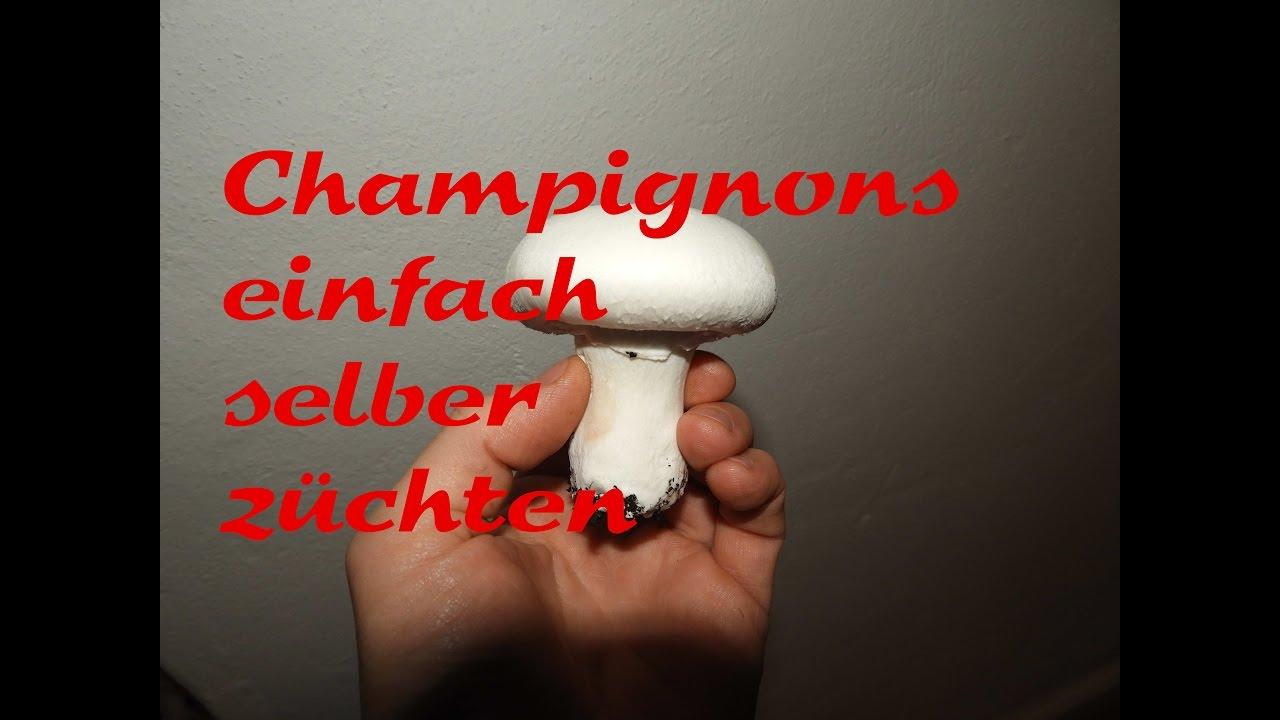 Pilzzucht Pilze Einfach Selber Zuchten Champignons Youtube