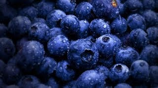 Benefits of Blueberries for your Health and Brain