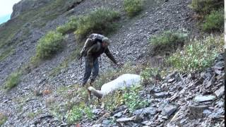 Membership Drive Winner: Tim Ross, Alaska Dall Sheep