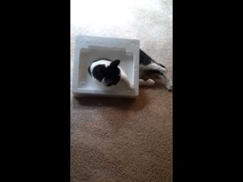 Cat stuck in styrofoam!