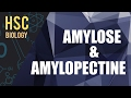 ০৭৩) অধ্যায় ৩ - কোষ রসায়ন : Amylose-Amylopectine [HSC | Admission]