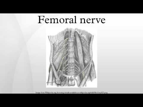 femoral nerve - youtube, Muscles