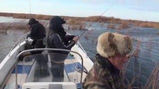 Видео об осенней рыбалке в Астрахани. У щуки сегодня жор. Ловля щуки на воблеры.
