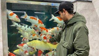 Monster Koi - Sakai Fish Farm - Koi Water Barn