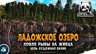Русская Рыбалка 4 Стрим Ладожское озеро Палия Лудожная