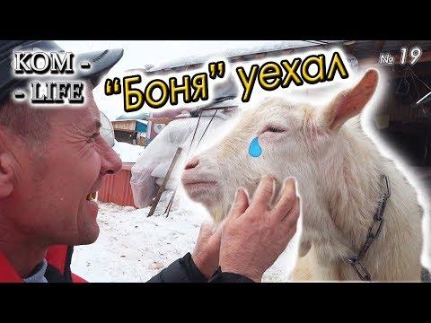 """ПРОДАЛИ """"БОНЮ"""" И ПОДАРОК """"ТОЛСТОМУ"""""""