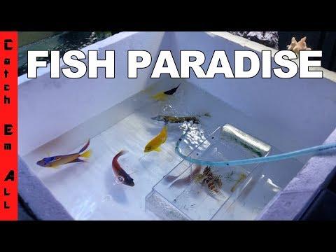 FISH PARADISE!