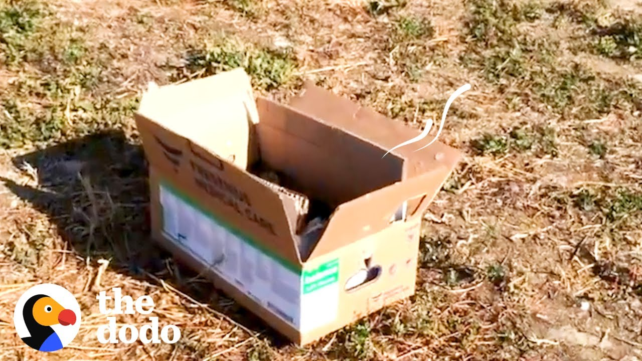 Man Finds Tiny Puppies In Box On Side Of The Road | The Dodo