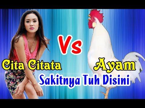 Ayam Bernyanyi Sakitnya Tuh Disini # Parodi Dangdut Lucu !!!