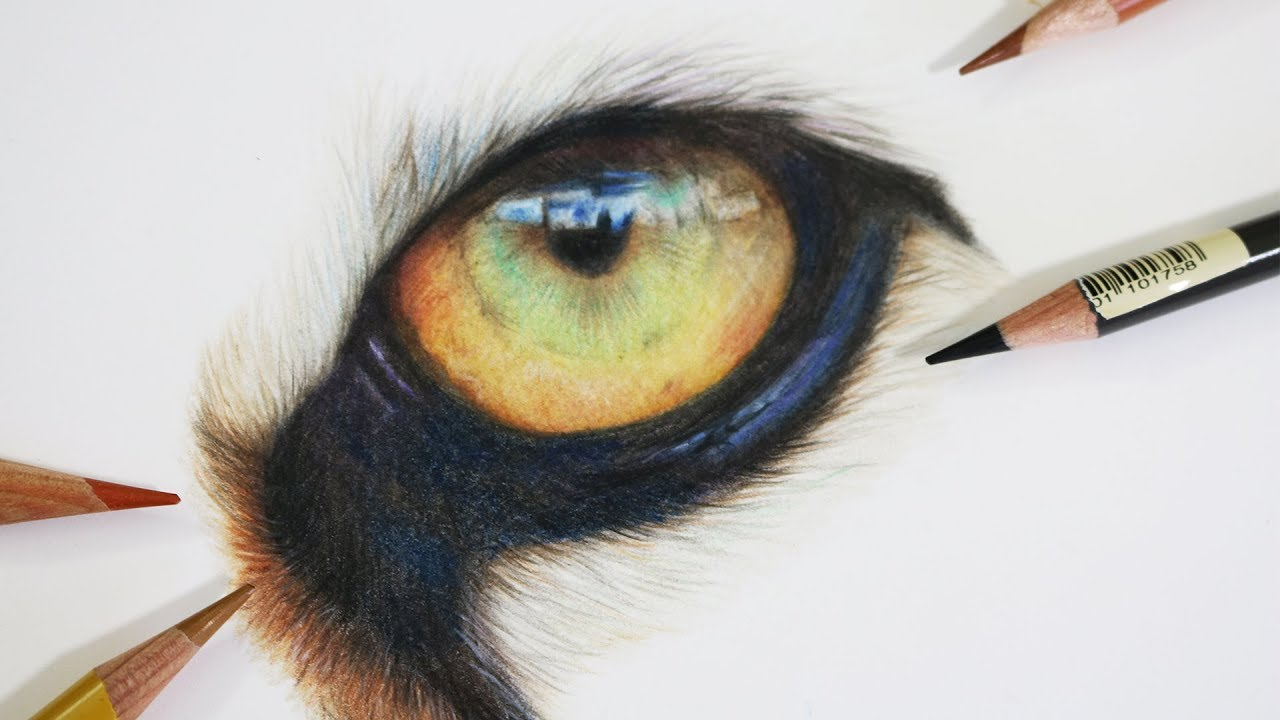 How to draw a realistic tiger eye coloured pencil drawing tutorial