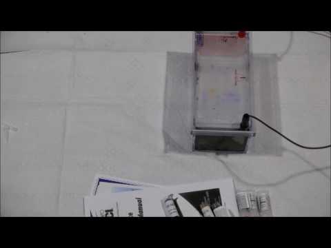 DNA Fragment Length: #2 Electrophoresis