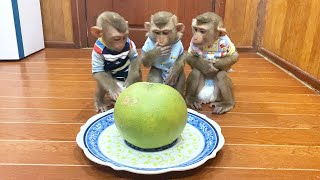 Judee, Jaila & Flloyd SiIently Sit For Their Grapefruit Snack