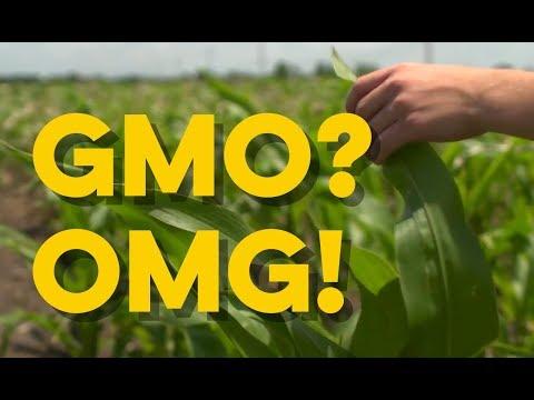 Verify: GMO Food