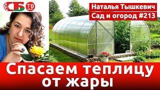 Как защитить от жары урожай в теплице