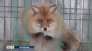 Управление ветеринарии: случаев бешенства в Вологодской области не зарегистрировано
