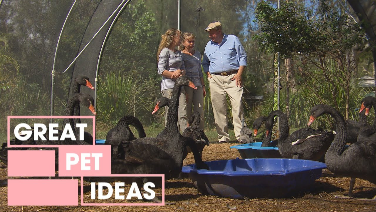 Twinnies Pelican Rescue | PETS | Great Home Ideas