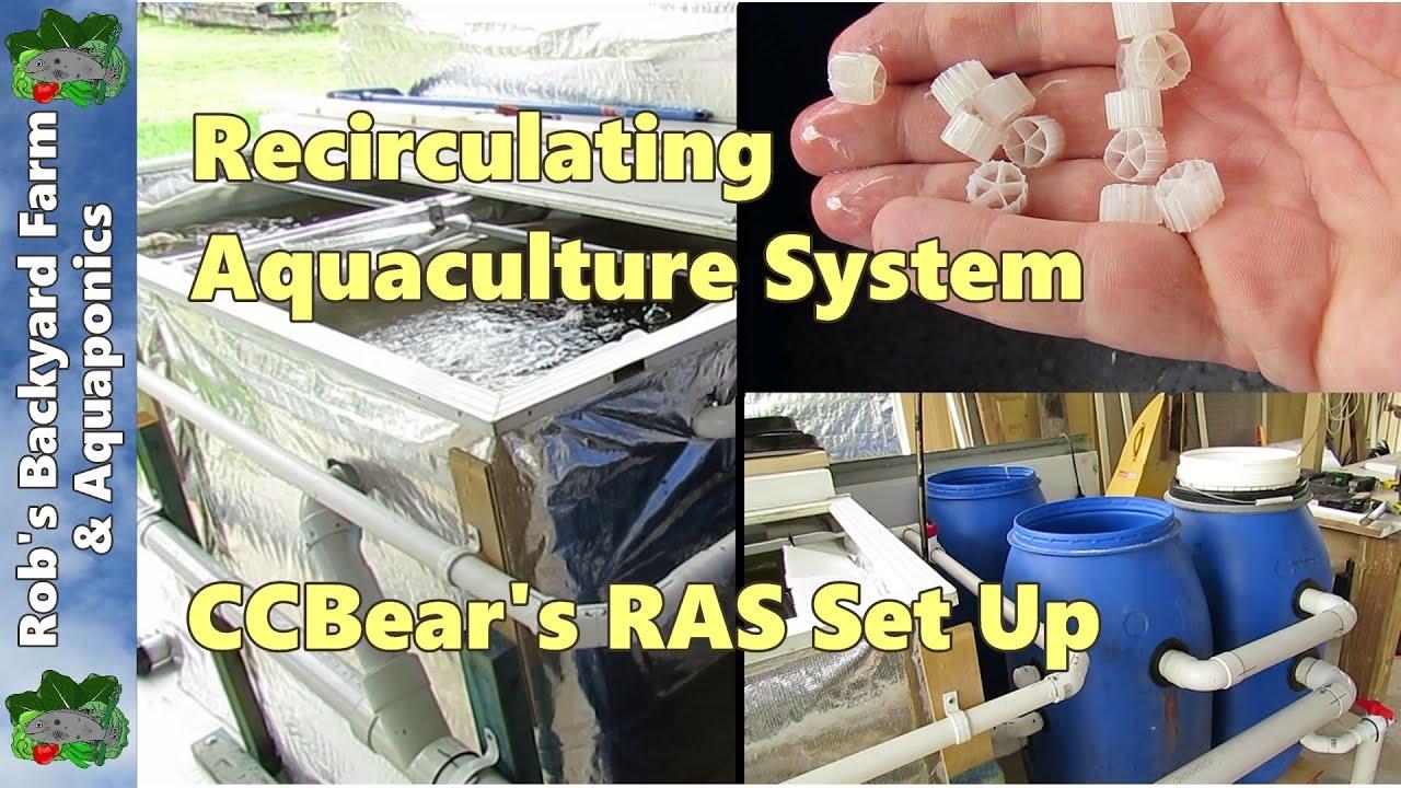 Recirculating Aquaculture System  Ras   A Visit To See Ccbear U0026 39 S Set Up