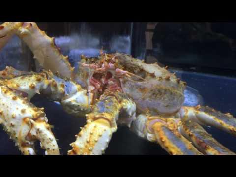 King Crab 4k