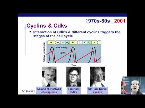 Cell Cycle Regulation.mp4