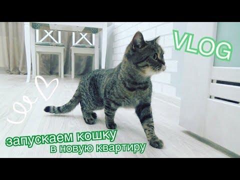 ✔ NEW VLOG: ПЕРЕЕХАЛИ! Кошка в новой квартире, покупки Faberlic, новое зеркало,большой цветок...