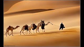 Праздники 24 сентября. Международный день караванщика. Суккот  #Праздник кущей