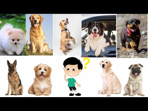 Best Dog for First Time Owners | dogs for first time owner | How to choose a dog