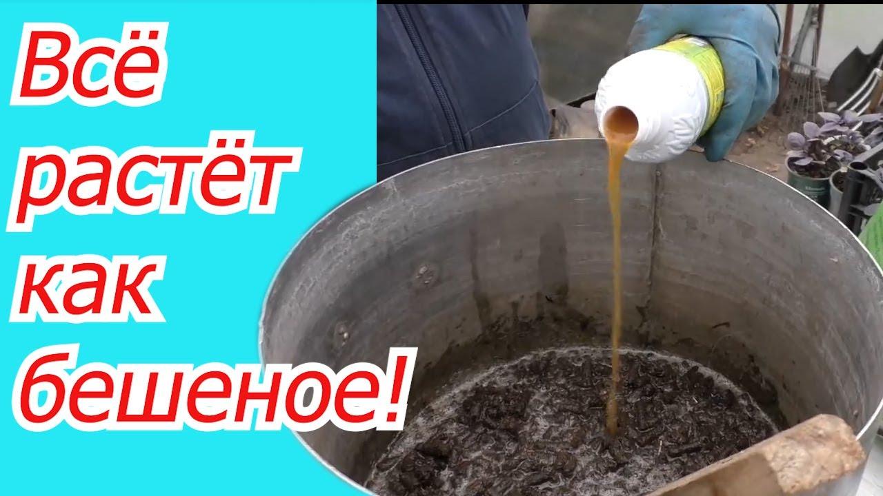 Готовим эффективную органическую подкормку от которой ВСЁ растёт!
