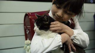 ストーリー> とある駅に住みつく一匹の猫が誘う、どこか不器用な人間た...
