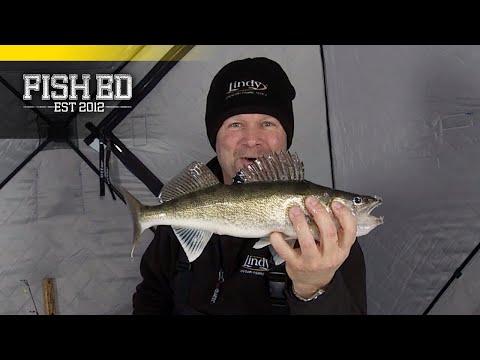 Fish Ed | Glow Streak Walleye