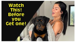 Watch this BEFORE you get a Rottweiler puppy!