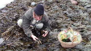 Harvesting Edible Seaweed (And Introducing the Kelly Kettle and Extreme Greens Seaweed Book )