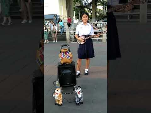 Bangkok Dancing Cats