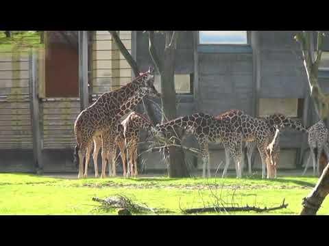 Rotterdam zoo..Blijdorp