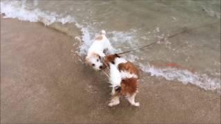 片男波海水浴場にて。泳いで走って海を満喫♪ http://jackpeace.blog.fc2...